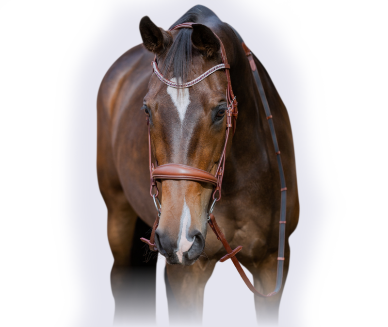 Bay Horse With Bridle