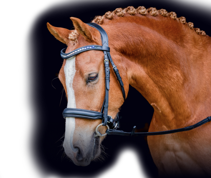 Chestnut Horse With Bridle